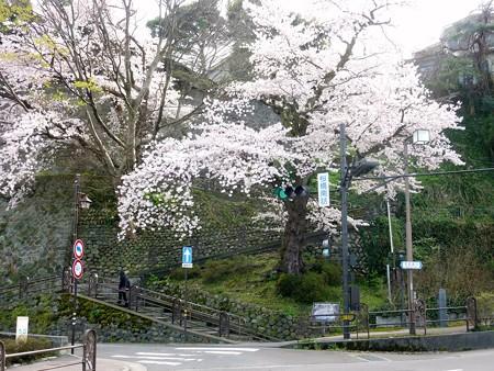 23、寺町〜犀川の桜