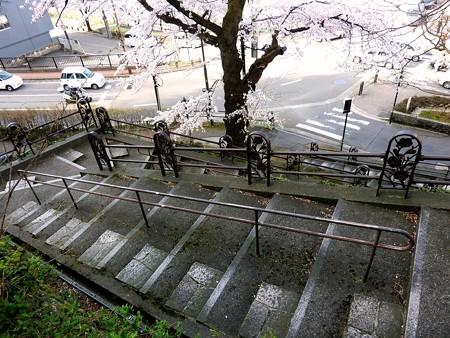 26、寺町〜犀川の桜