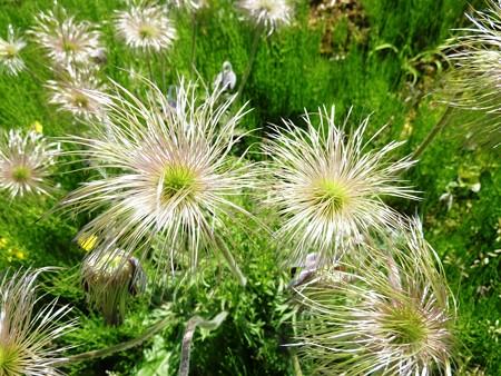 11−吉岡園地の花