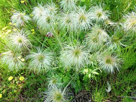 12−吉岡園地の花