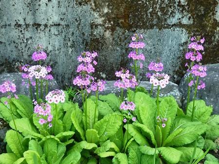 14−吉岡園地の花