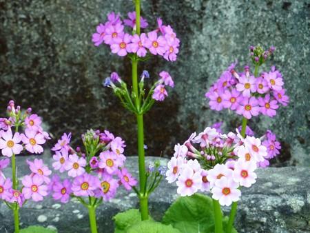 15−吉岡園地の花