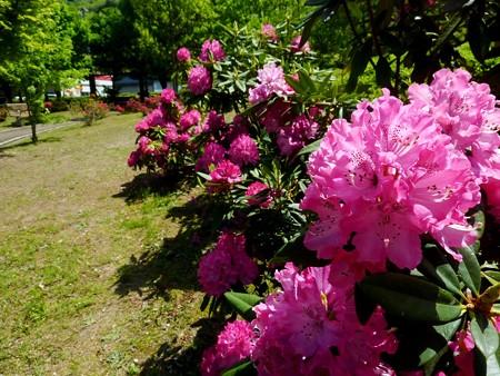20−吉岡園地の花