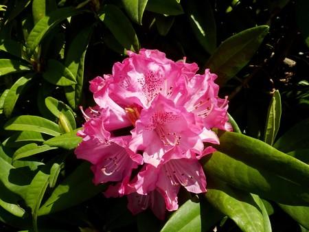 21−吉岡園地の花