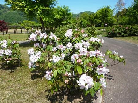22−吉岡園地の花