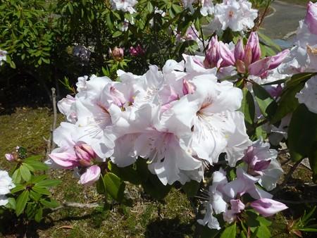 23ー吉岡園地の花