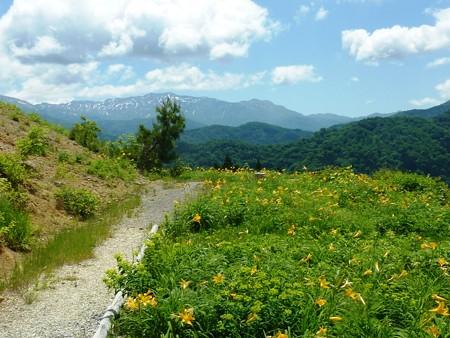 8-白山高山植物園