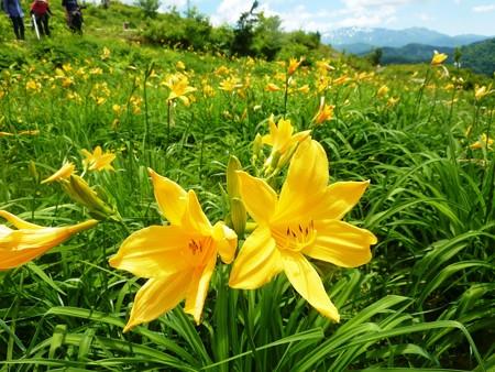 9-白山高山植物園