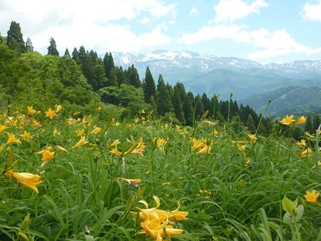 10-白山高山植物園