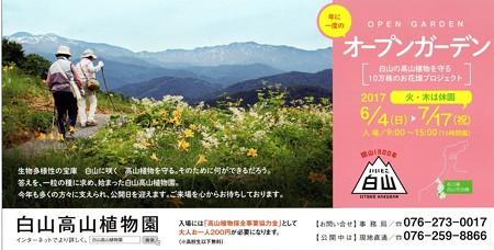 ニッコウキスゲが咲く高山植物園