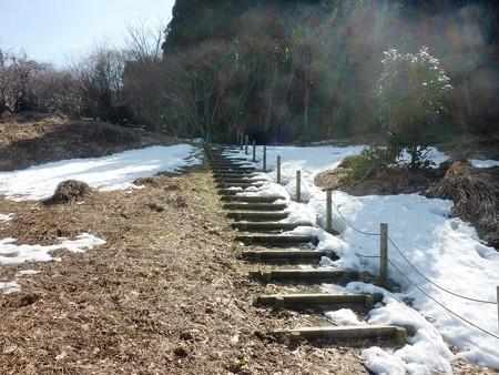 5-早春の丘陵公園