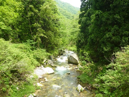 5月の渓流釣   (1)