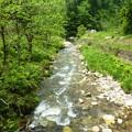 5月の渓流釣   (2)