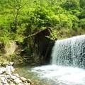 5月の渓流釣   (3)
