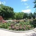 春の薔薇園(2)