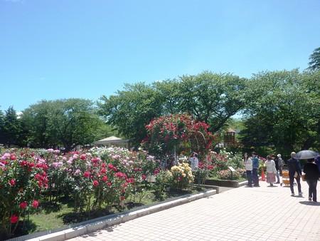 春の薔薇園(4)