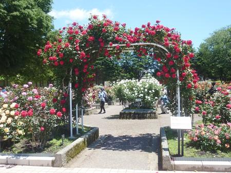 春の薔薇園(5)