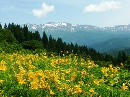 お山は花盛り=白山高山植物園