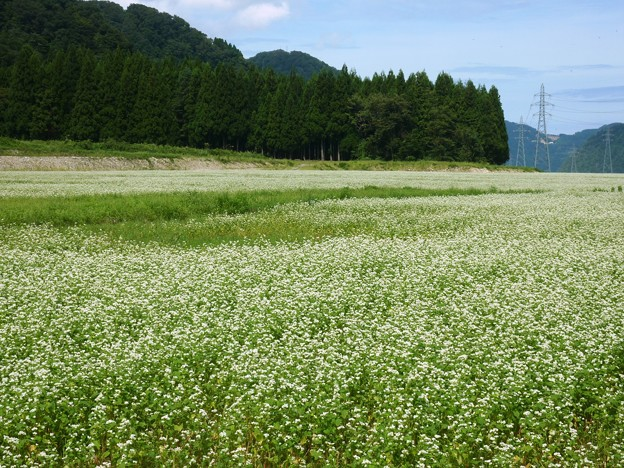 2-2018-09-13 蕎麦の花