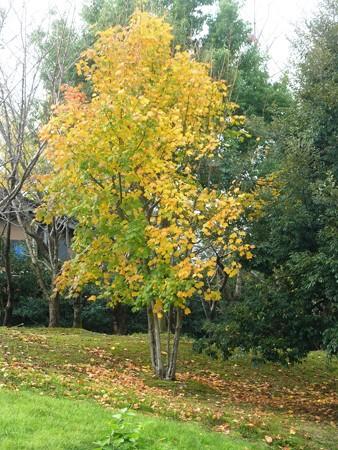 秋の丘陵公園