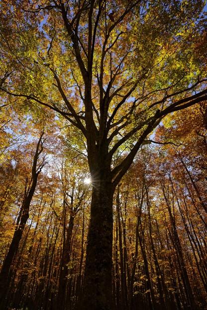 とある木-晩秋