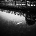 GR2池の鯉