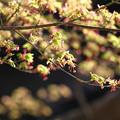 写真: 紅葉咲く