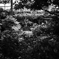 Photos: お庭