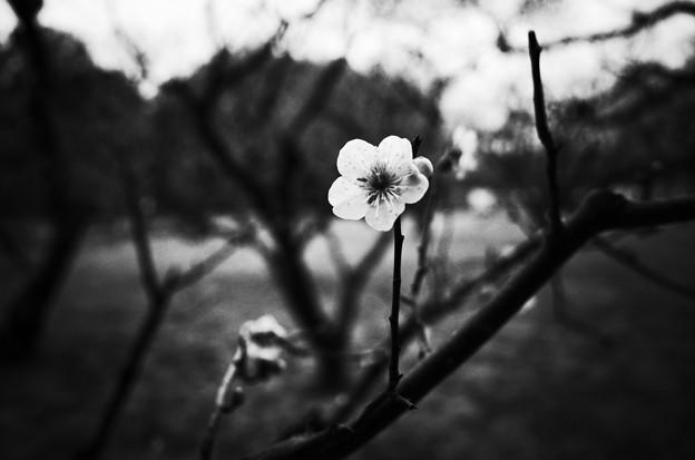 写真: KORAKUEN