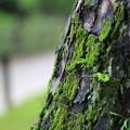 Photos: KORAKUEN