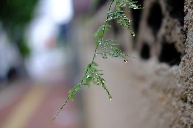写真: 水滴