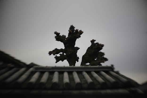 Photos: KURASIKI