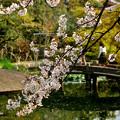 Photos: 四天王寺の桜 20190404-1