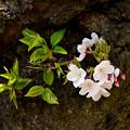 Photos: 四天王寺の桜 20190404-4