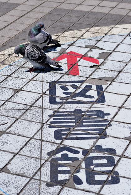 Photos: 府立図書館前