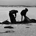 Photos: 氷下魚漁 風連湖 1969-#2