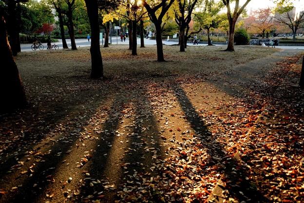長居公園の晩秋#2