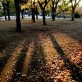 Photos: 長居公園の晩秋#2