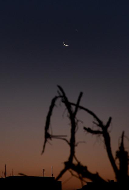 月と金星が大接近