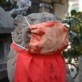 Photos: マスク狛犬阿形
