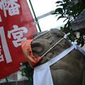 Photos: マスク狛犬吽形