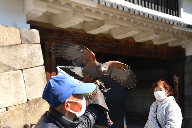 Photos: 鷹匠#2