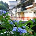 写真: 銀山温泉を飾る