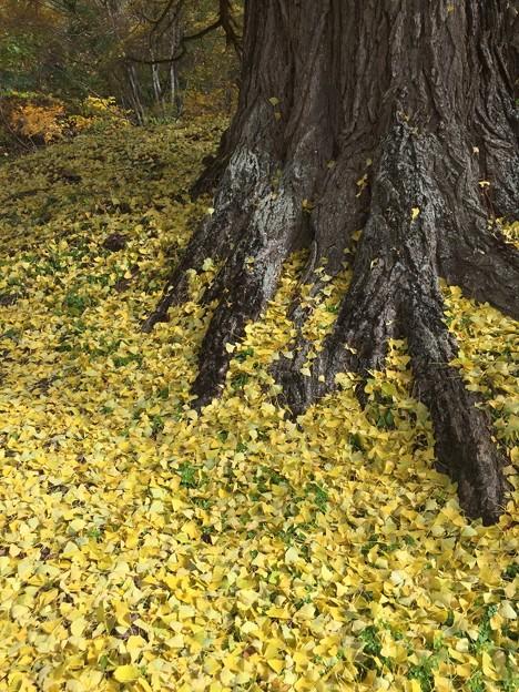 大樹の温もり