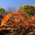 安楽寺八角三重塔の秋