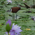 写真: 花鳥園にて