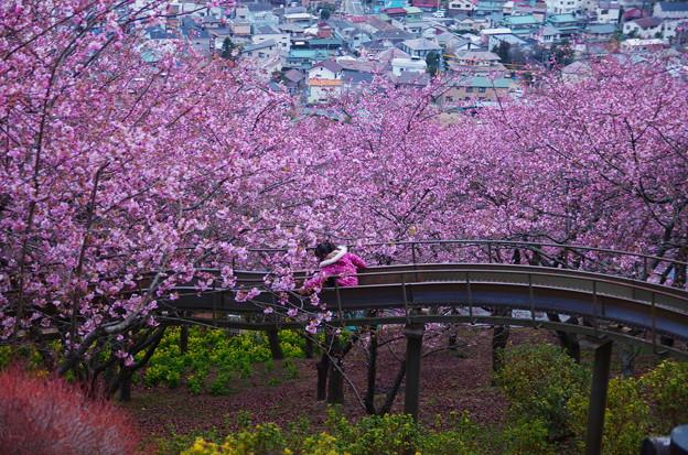 IMGP9000 桜の中へ