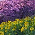Photos: IMGP8146 春の訪れ