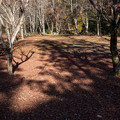 Photos: 葉を落とし 影落とし