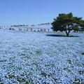 [2018年4月22日]ひたち海浜公園